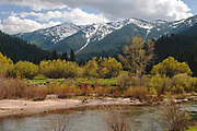Grizzly Ridge From Indian Creek, Willows, Alders and Cottonwoods, Genesee Valley Ranch, Spring