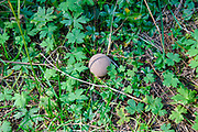 Toadstool grows on a forest floor. Photographed on Elfer Mountain, Stubaital, Tyrol, Austria
