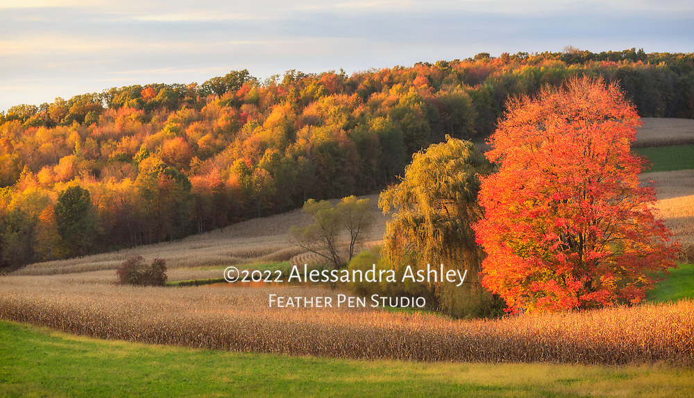 Sunset light highlights midwestern landscape, with cornstalks, trees, and pond reflecting brilliant autumn foliage.