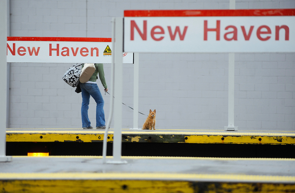 A passenger and dog wait on the platform for a train at Union Station in New Haven, Conn., Monday, May 23, 2011. A 62-mile high speed rail project is planned between New Haven and Springfield, Mass. (AP Photo/Jessica Hill)