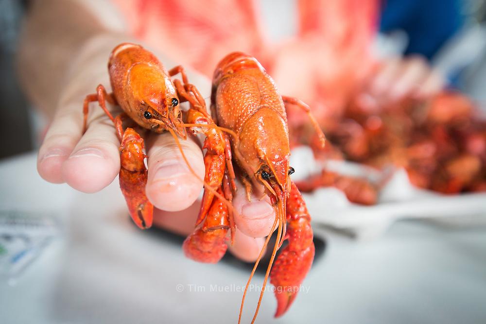 A pair of boiled crawfish served up at a Louisiana crawfish boil.