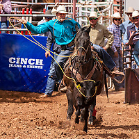 Photo: Jeffery Jones<br /> Cash Hooper lassos a calf Saturday during the calf roping event of the New Mexico High School Rodeo Association State Finals at Red Rock Park.