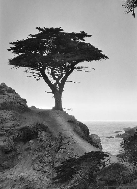 Pacific Coast, California, USA, 1926