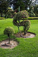 Topiary at Royal Park Ratchpruek - During tihe celebrations for the King of Thailand's 60th anniversary of his accession to the throne, Ratchapruek Royal Gardens in Chiang Mai put on a great show of flowers, gardens, and displays.  Besides Thailand, 21 countries participated by contributing gardens, in particular Holland and Japan are favorites that still stand today.
