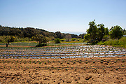 Organic crops during an open day at Can Tria de Mata, near Mataro, Barcelona, Catalonia. (c) Dave Walsh 2017