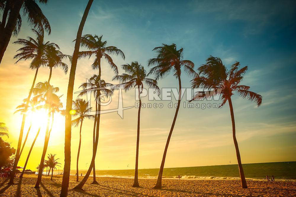 Coqueiral na Praia de Cumbuco localizada no município de Caucaia, a 30 km da capital, Fortaleza no estado do Ceará. FOTO: Jefferson Bernardes/ Agência Preview