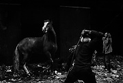 Manchiet Nasr.A horse in runing lose