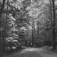 1. When was this photo taken? <br /> <br /> 2005<br /> <br /> 2. Where was this photo taken? <br /> <br /> Ward Pound Ridge Reservation, Cross River, NY<br /> <br /> 3. Who took this photo? <br /> <br /> Sarah Landis<br /> <br /> 4. What are we looking at here? <br /> <br /> Second-growth hardwood forest and riding trails with 2 riders on horseback.<br /> <br /> 5. How does this old photo make you feel? <br /> <br /> This image captures a feeling of serenity. I can feel the warmth of the sun filtering through the leaves of the trees, and the refreshing shade the trees offer. I can hear the silence, punctuated by birdsong and slow hoofbeats.<br /> <br /> 6. Is this what you expected to see? <br /> <br /> I had forgotten about this image. Truthfully, that day was marred by the half-dozen ticks I found crawling up my legs. I fled the park and didn't return for several years.<br /> <br /> 7. Does this photo bring back any memories? <br /> <br /> This photo shows me evidence of a calm and peaceful day, contradicting my own memory of being besieged by blood-sucking ticks. Sometimes we focus on one detail or moment and loose sight of other equally strong moments.<br /> <br /> 8. How do you think others will respond to this photo? <br /> <br /> The majesty of the trees and the mild weather is clear, transmitting a feeling of tranquility, punctuated by the two riders on horseback, sauntering slowly down the trail. It will evoke a serene connection in viewers, who will be able to step into the image and, hence, the moment.