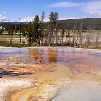 North America, USA, United States, Wyoming, Yellowstone. Geothermal landscape of geyser basin.