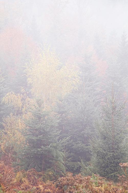 Trees in the mist, Autumn, Echandelys, PNR Livradois-Forez, Auvergne, France