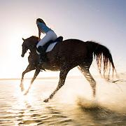 Horse Riding - Noordhoek