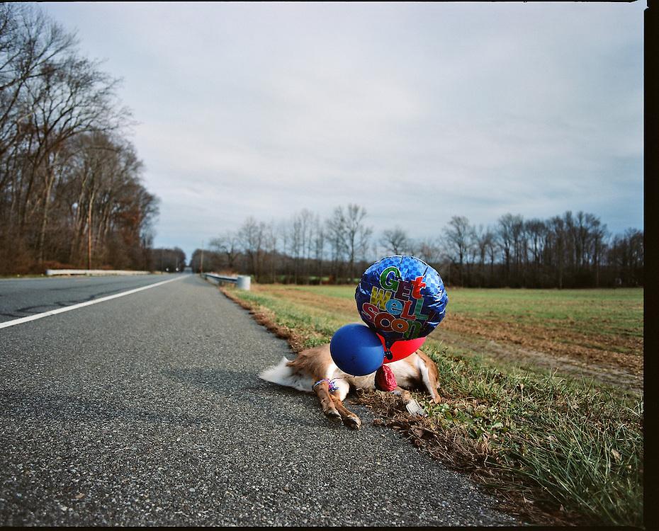 Monroeville, New Jersey - November 30, 2013:<br /> <br /> Get Well Soon, Deer.