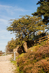 View up Thickwoods lane towards Langsett Reservoir <br />