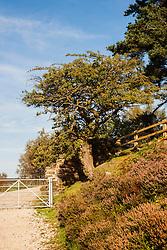 View up Thickwoods lane towards Langsett Reservoir <br /> 07 October 2012<br /> Image © Paul David Drabble