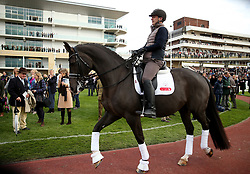 Equine superstars Valegro being ridden around in the paddock during the April Meeting at Cheltenham Racecourse