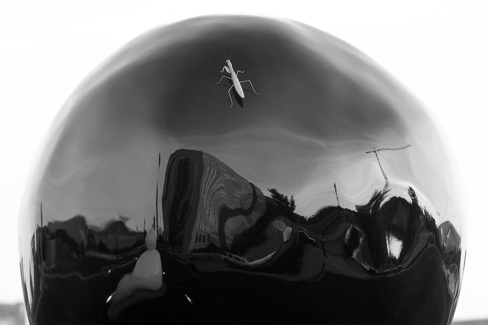 http://Duncan.co/praying-mantis-on-sphere