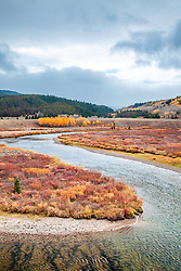 Green River Autumn.  A stormy day, golden aspens and red willows along the banks of the Upper Green River northwest of Pinedale Wyoming