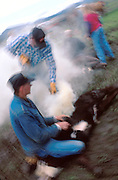 Scene from a cattle roundup and branding at a ranch in Belle Fourche, South Dakota
