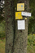 Markings on a tree indicating direction Black Forest Germany