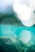 Ethereal soft sparkling underwater photo of the reef in Guadeloupe