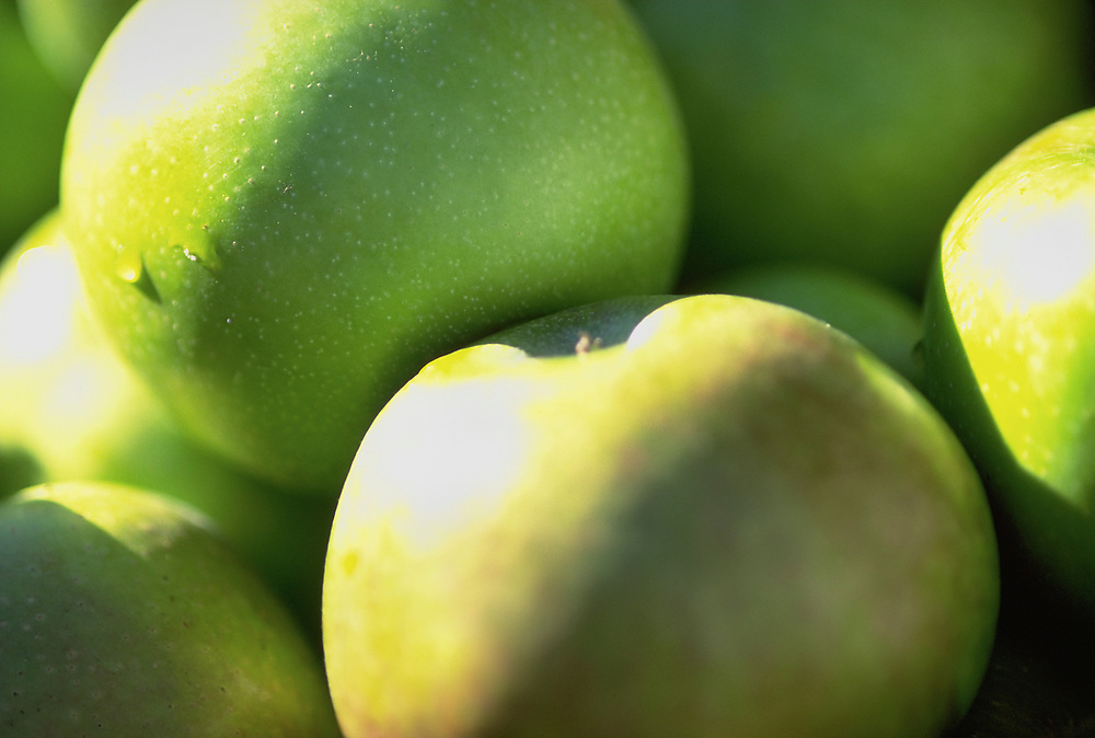 Close up selective focus photograph of a pile of Pippin apples
