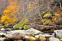 Fall Colors - Chimney Rock, North Carolina