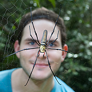 Golden Orb Spider, Nephiladae, on a web with a man standing behind