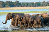 Travel Highlights of Sri Lanka