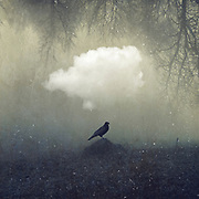 Raven in a field - surreal imagery<br /> Available in my Redbubble shop here --> http://bit.ly/enigma_proud_raven_rb