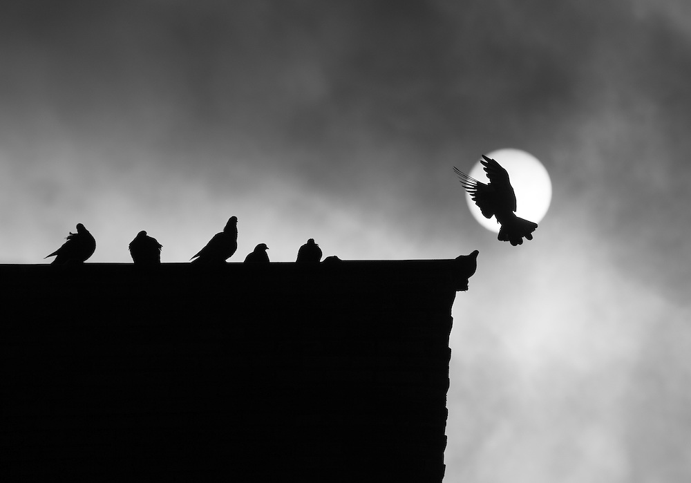 10/29/2013 - New York, NY - A bird lands on a roof on Pinehurst Ave., in Washington Heights as cooling weather brings in clouds from the west. Photo by Jim Anness