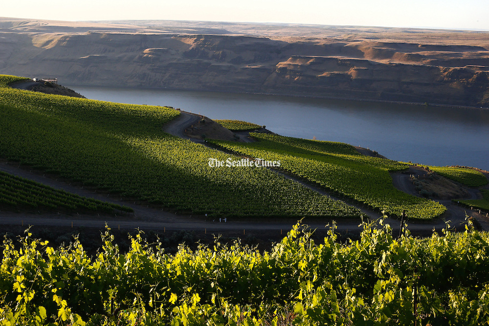A commanding view of the Columbia River is seen from atop the Benches vineyard, belonging to Long Shadows winery. (John Lok / The Seattle Times)
