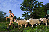Northland Sheep Dairy Farm