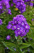 Wild Flowers, England