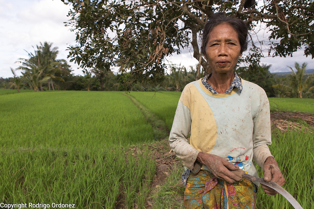 Setep, 60, poses for a photograph during a break from work in her rice paddy in Paok Gading subvillage, Gumantar, Kayangan subdistrict, North Lombok district, West Nusa Tenggara province, Indonesia. Floods and other disasters in this region often affect rice crops.