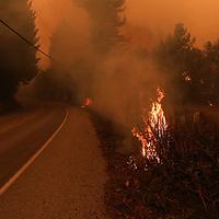 CZU August Lightning Complex burns in Bonny Doon on Thursday August 20, 2020.<br /> Photo by Shmuel Thaler