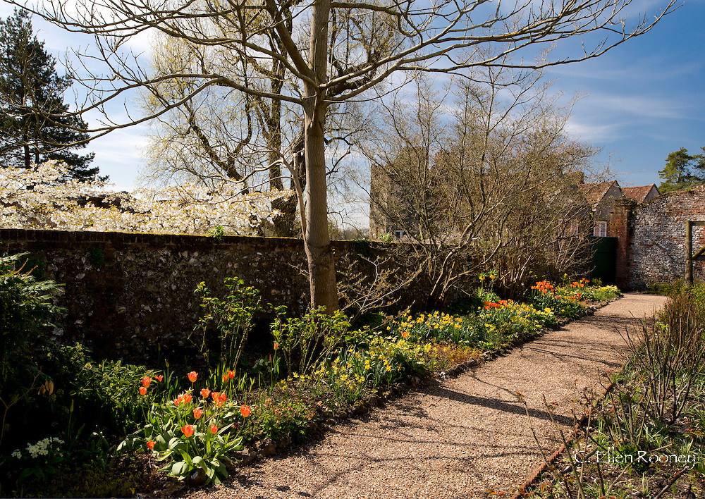 Tulips and Narcissus in a border in the rose garden at Greys Court, Rotherfield Greys, Henley-on-Thames, Oxfordshire, UK