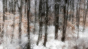 Woods covered with freshly fallen snow