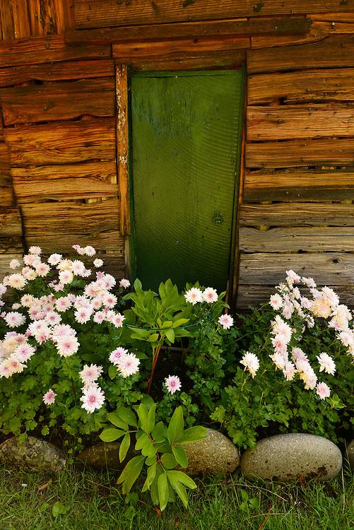 Flower's blooming outside Buckskin Bill's cabin along the Salmon River in Idaho.