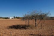 Fields of Formentera