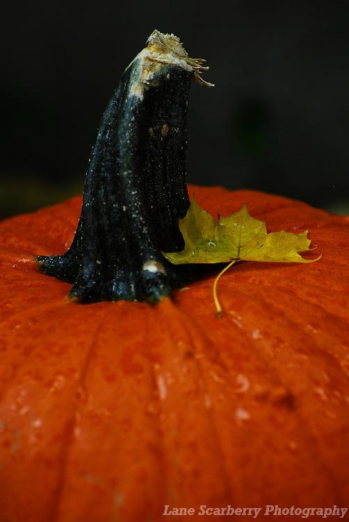 Autumn Leaves in Columbus, Ohio