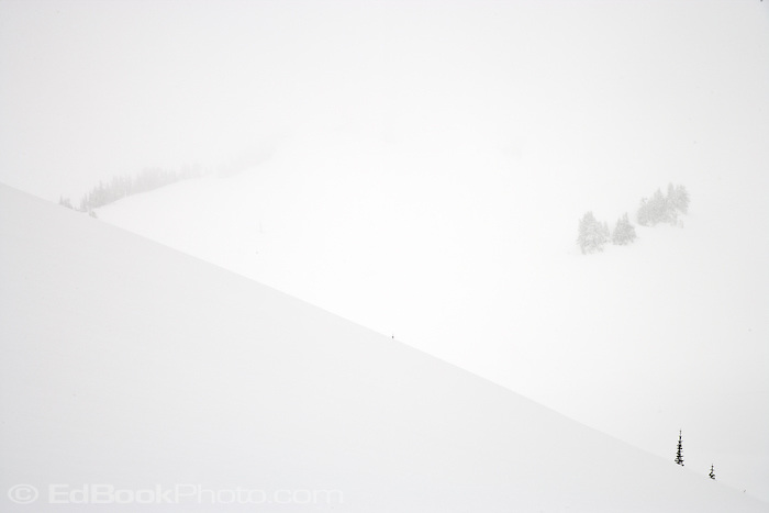 snowstorm at Paradise in Mount Rainier National Park, Washington, USA