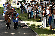 Fine fillies and other horses paraded before the next race at the L'Ormarins Queens Plate event 2011. Image by Greg Beadle