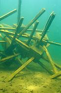 Fish Attractor<br /> <br /> ENGBRETSON UNDERWATER PHOTO