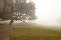 Misty morning on the fairways of the Plantation Course of the Sea Island Golf Resort on St. Simons Island, Georgia