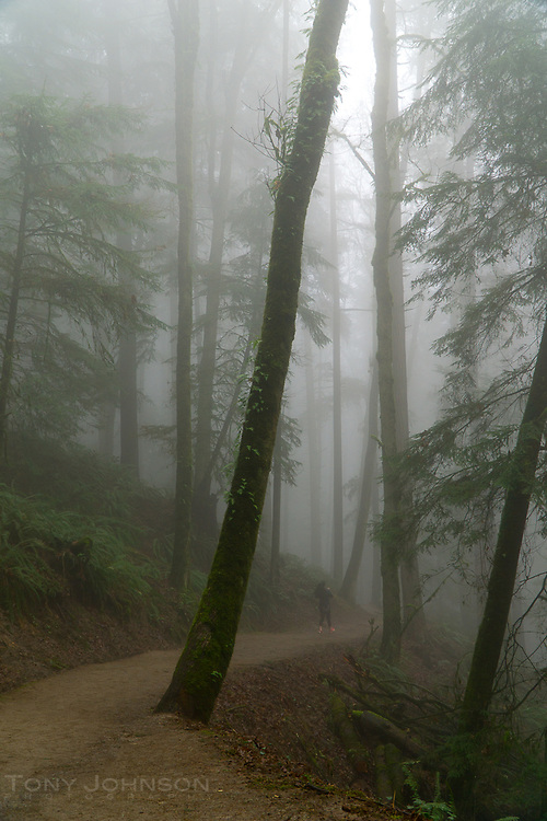 walker on the Wildwood Trail, Portland, OR