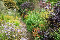 Brick path through the hot borders at Glebe Cottage. Dahlia 'Bishop of Llandaff', Rudbeckia fulgida var. deamii, Aster 'Little Carlow', crocosmias, fennel and Cotinus coggygria Purpureus Group