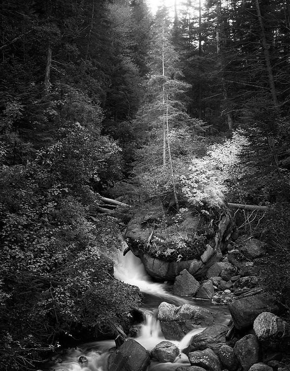Barters Brook in Gross Morne Newfoundland
