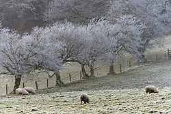 © Licensed to London News Pictures. 07/01/2021. Builth Wells, Powys, Wales, UK. Freezing cold wintry landscape near Builth Wells in Powys, UK. After temperatures dropped to around minus 3 deg C. Photo credit: Graham M. Lawrence/LNP