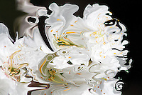 contrasts of the nature in bright white fluid shapes with yellow shades on black background
