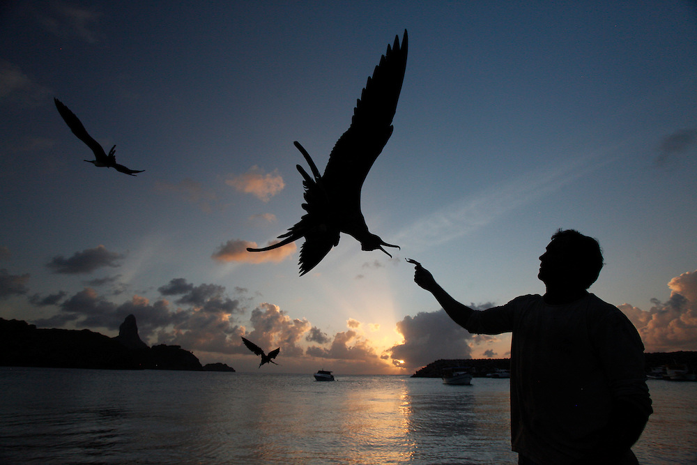 Fernando de Noronha_PE, Brasil.<br /> <br /> Imagens do Parque Nacional Marinho de Fernando de Noronha, Pernambuco. Fragata ou Tesourao (Fregata magnificens) sendo alimentada por pescador na Baia de Santo Antonio.<br /> <br /> Fernando de Noronha Marine National Park in Pernambuco. The magnificent frigatebird (Fregata magnificens) being fed by fisherman in Baia de Santo Antonio<br /> <br /> Foto: JOAO MARCOS ROSA / NITRO